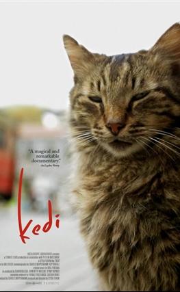 Portada de la película Kedi (Gatos de Estambul)